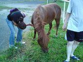 Koně z Rožnova